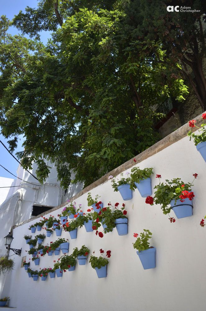 Blue flower pots on the wall