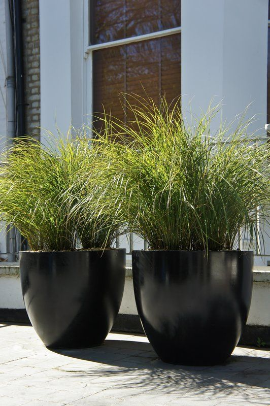 Big planters for outside with spiky grass