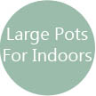 Large Pots for indoors