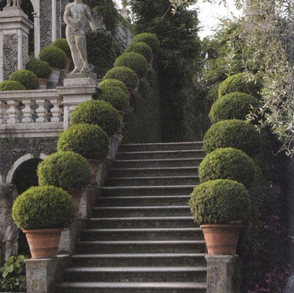 buxus pots line steps