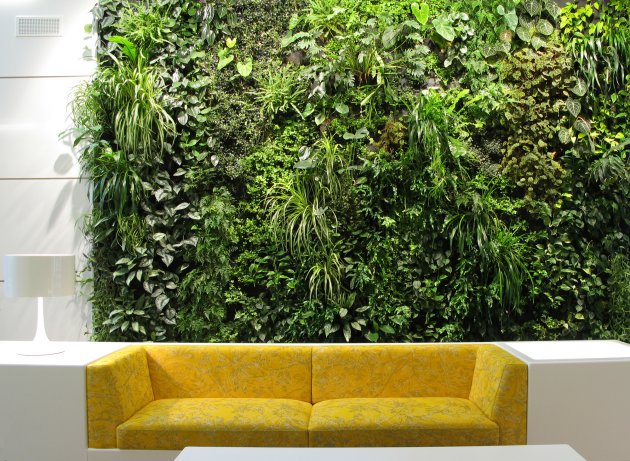 Vertical garden with yellow sofa