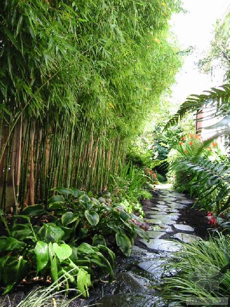 Bamboo next to a garden stream