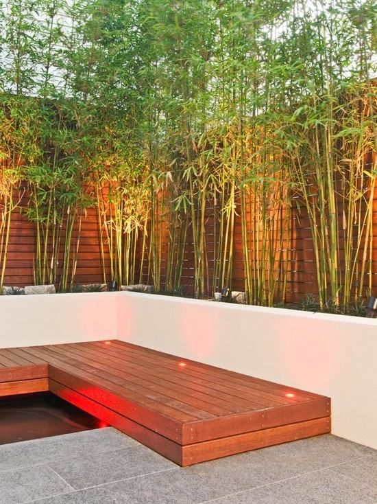 Red uplit garden with bamboo on planters