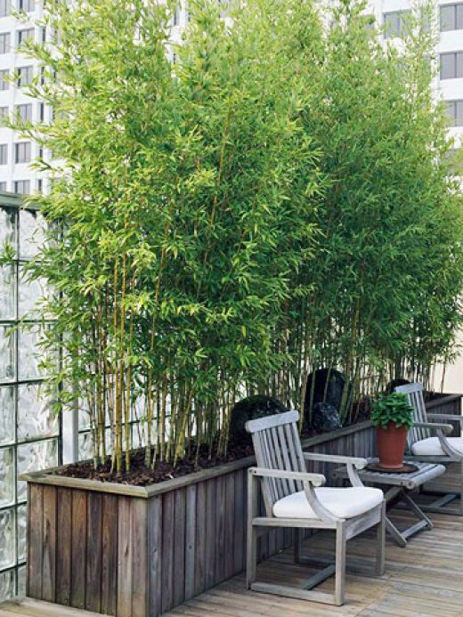 wooden box planters with bamboo