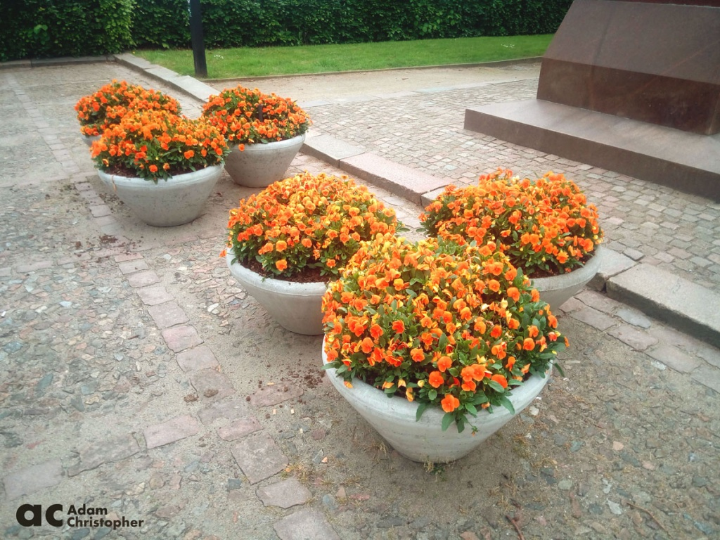 Concrete commercial planters with orange flowers