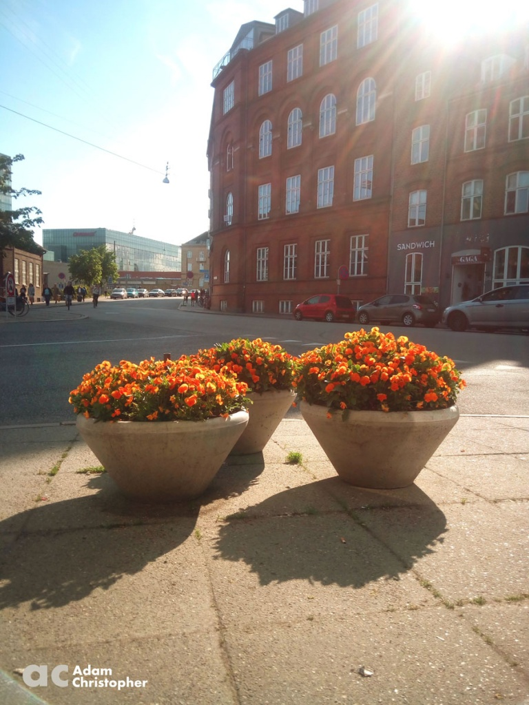 Orange flowers in concrete flower pots