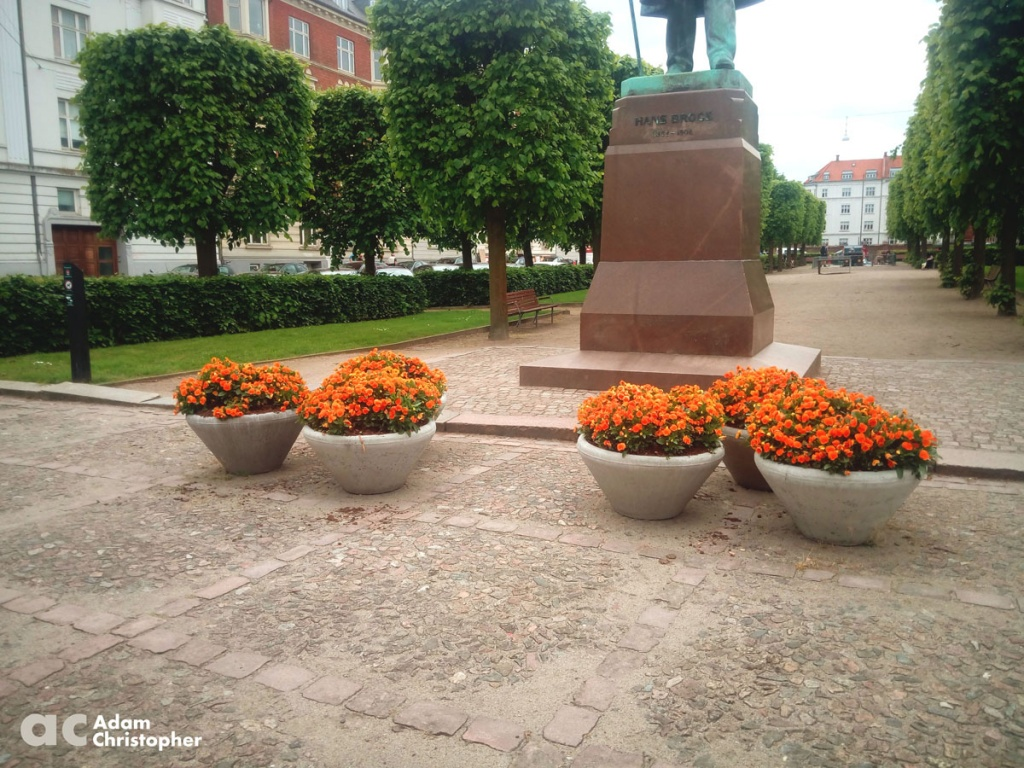 Orange flowers in concrete public space planters