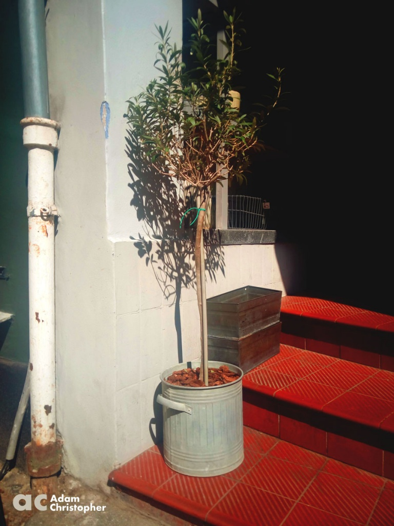 quaint metal flower pot on a step with an olive tree
