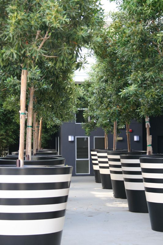 Black and White Stripe Planters For Trees