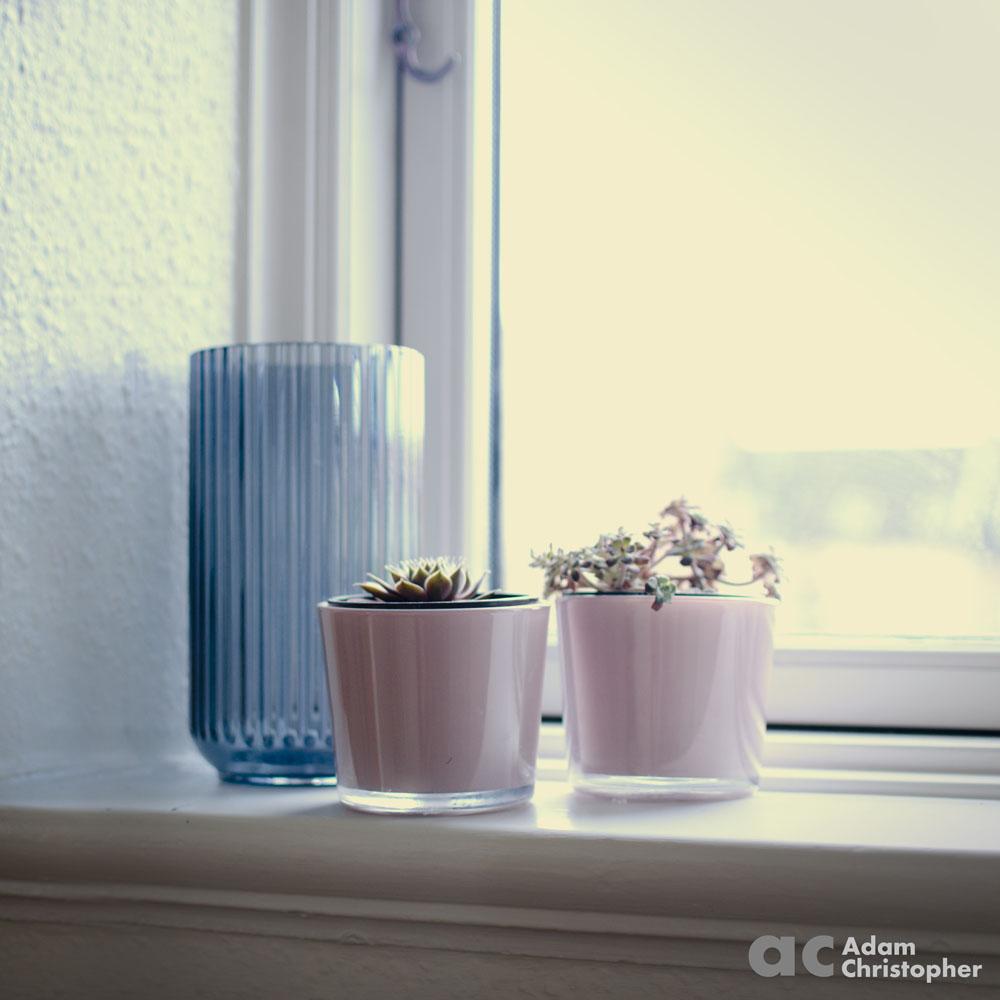 Flower pots with succulents logo 1000