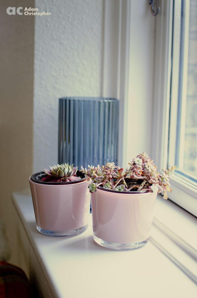 flower pots with succulents on wondow sill logo 1000