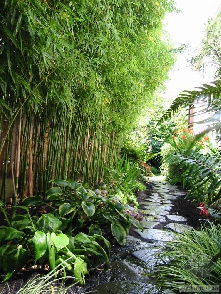 8 Gardens That Use Bamboo – Award Winning Contemporary